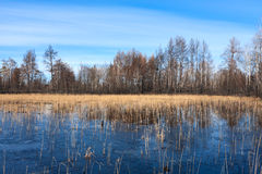 Dead forest. And forests lake Royalty Free Stock Photos