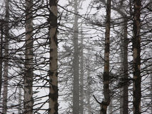 Dead forest Royalty Free Stock Images