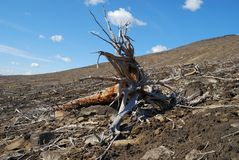 Dead forest Royalty Free Stock Photo