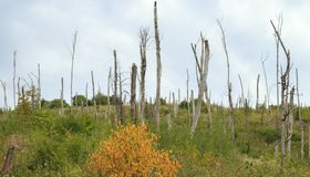 Dead forest, destroyed by fire in the Caucasus Mountains. Royalty Free Stock Photography