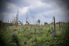 Dead forest, destroyed by fire in the Caucasus Mountains. Stock Photos