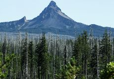 Dead forest in front of remarkable peak in norther california stock photos