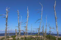 Dead forest on island in sea Stock Image