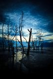 Dead forest and muddy beach at twilight Stock Photos