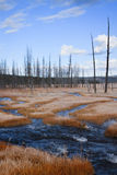 Dead Forest and Stream in Yellowstone Royalty Free Stock Images