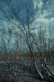 Dead forest in a swamp Stock Photos