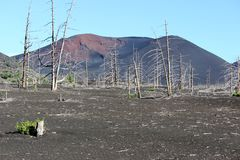 Dead Forest, Tolbachik volcano Stock Photography