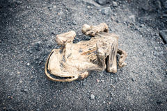 Dead frog. Royalty Free Stock Photo