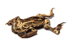Dead frog isolated Stock Photography