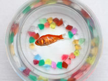 Dead gold fish Stock Photos