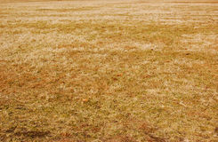Dead Grass Royalty Free Stock Image