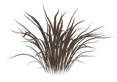 Dead Grass Stock Images