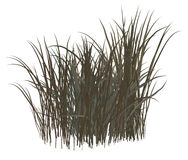 Dead Grass Royalty Free Stock Photos
