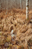 Dead grass in autumn forest Stock Photos