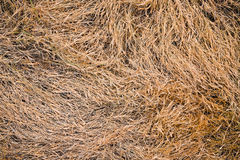 Dead grass,ellow grass from weedkiller ,herbicide Royalty Free Stock Photos