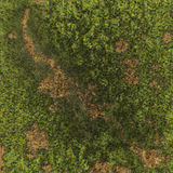 Dead Grass. Green grass with brown dead patches Royalty Free Stock Images