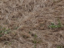 Dead grass. And green weeds Stock Images