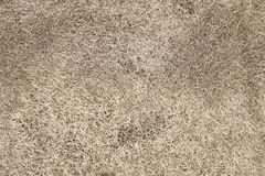 Dead grass Royalty Free Stock Photo
