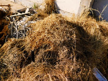 Dead grass. Photo of Dead grass in the city Royalty Free Stock Image