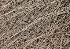 Dead grass texture Royalty Free Stock Photography