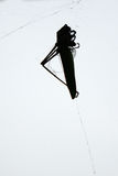 Dead grasshopper in blank and white Stock Photo