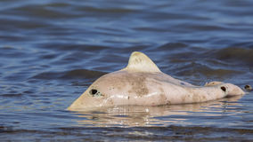 Dead Harbour Porpoise royalty free stock image