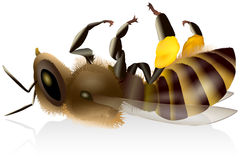 Dead Honey Bee. Illustration of an  dead honey bee with pollen baskets. Vector on white background Stock Photography