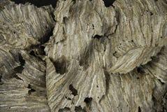 Dead Hornets nest. Close view of a crumpled, dead wasps nest stock photos