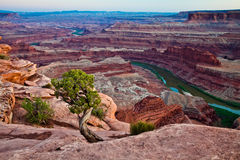 Free Dead Horse Point Royalty Free Stock Images - 28003749