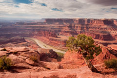 Dead Horse Point Overlook. View of Colorado River and Canyonlands from Dead Horse Point Overlook with Jumiper Tree in Foreground Stock Photo