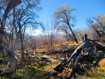 Dead Horse Ranch. State Park covers 423 acres. The 3,300 foot elevation accounts for the mild temperatures that are ideal for camping, mountain biking in the Stock Photos