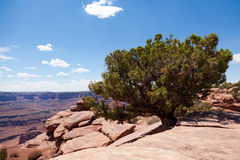 Dead horse view in Utah Stock Photography