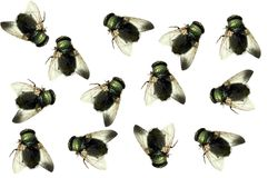 Dead house fly Stock Images