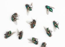 Dead house fly. A collection of dead fly , in a pile or isolated on white stock photos