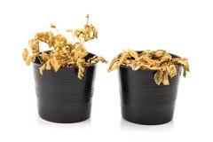 Dead houseplant Stock Photo