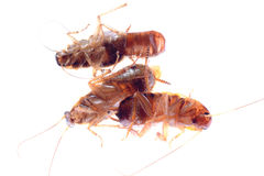 Dead insect cockroach bug Stock Image
