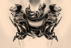Dead insect effect Stock Photos