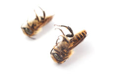 Dead Insect Royalty Free Stock Images