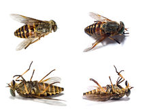 Dead insects 1 Royalty Free Stock Photos