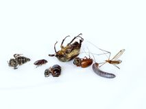 Dead insects. Isolated dead crawling and flying insects Stock Images