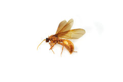 Dead insects Royalty Free Stock Photography