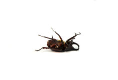 Dead insects Royalty Free Stock Photos