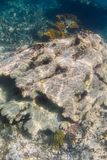 Dead coral reef Stock Photo