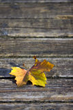 Dead leaf Stock Photography