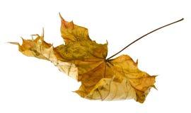 Free Dead Leaf Stock Image - 15267501