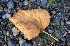 Dead leaf Royalty Free Stock Images