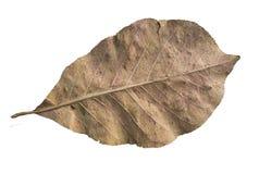 Dead leaf Stock Images