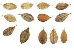 Dead leaf Stock Photos