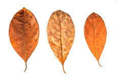 Dead leaf Stock Photo