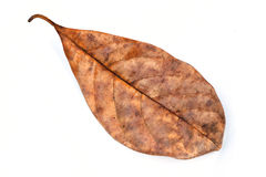 Dead leaf Royalty Free Stock Photo